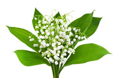 Beautiful lilies of the valley Stock Photography