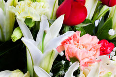 Beautiful  lilly, carnation and rose with water dr Stock Images