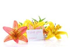 Beautiful  lily Stock Image