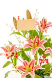 Beautiful lily blossom Stock Photos