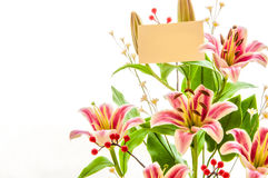 Beautiful lily blossom Stock Photography