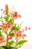 Beautiful lily blossom Stock Images