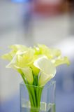 Beautiful lily bouquet Stock Photos