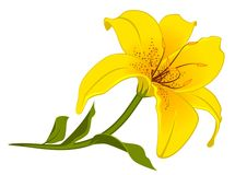 Beautiful Lily Design Element Royalty Free Stock Images