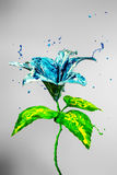 Beautiful lily flower made of blue and green paint Stock Images