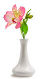 Beautiful lily flower in the vase Royalty Free Stock Photo