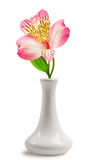 Beautiful lily flower in the vase Royalty Free Stock Images