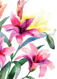 Beautiful Lily flowers. Watercolor illustration Stock Photography