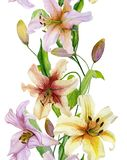 Beautiful lily flowers with green leaves on white background. Seamless floral pattern. Straight and narrow. Watercolor painting. Hand drawn and painted Stock Photos