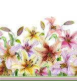 Beautiful lily flowers with green leaves on white background. Seamless floral pattern. Watercolor painting. Hand drawn and painted illustration. Fabric royalty free illustration