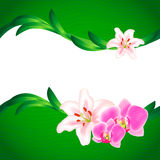 Beautiful Lily and Orchid background. Vector illustration Stock Illustration