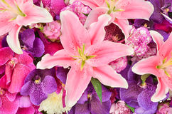 Beautiful lily and orchid flowers Stock Photography