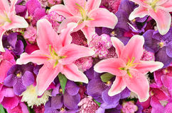 Beautiful lily and orchid flowers Stock Image