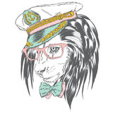 Beautiful lion in the captain`s cap. King of beasts. Vector illustration for greeting card, poster, or print on clothes. Sailor. Stock Photos