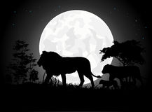 Beautiful Lion family silhouettes with giant moon background Stock Images