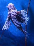 Beautiful lion fish. Swimming on a sea on aquarium royalty free stock photo