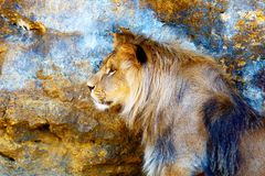Beautiful Lion resting in the sunshine. Profile portrait. Stock Photo