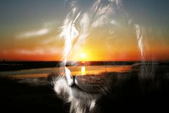 Beautiful Lion Silhouette Portrait With Scenic Sunrise Background