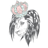 Beautiful lion wearing a crown. King of beasts. Vector illustration for greeting card, poster, or print on clothes. Stock Image