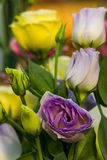 Beautiful Lisianthus flower Royalty Free Stock Images