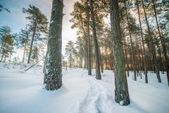 Beautiful Lithuanian nature in winter royalty free stock image
