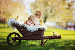 Beautiful little baby boy, sleeping with three little ducklings. In a cart, outdoors image in the park, springtime stock photo