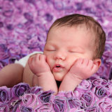 Beautiful little baby girl in studio Royalty Free Stock Images