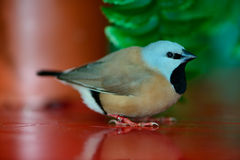 Beautiful little bird Royalty Free Stock Photos