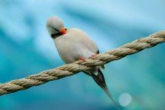 Beautiful little bird Stock Image