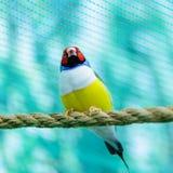 Beautiful little bird Stock Photo