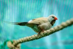 Beautiful little bird Stock Images