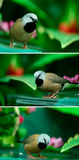 Beautiful little bird Royalty Free Stock Photo