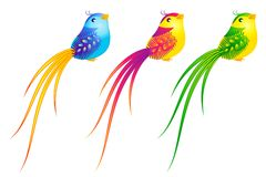 Beautiful little birds Royalty Free Stock Image