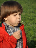 Beautiful little boy blowing dandelion. Happiness, fashionable concept Stock Photos