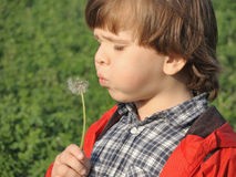 Beautiful little boy blowing dandelion. Happiness, fashionable concept Stock Images