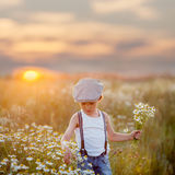 Beautiful little boy in daisy field on sunset Stock Images