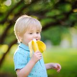 Beautiful little boy eating banana during picnic in summer sunny Stock Photography
