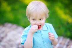 Beautiful little boy eating strawberry during picnic in summer sunny park Royalty Free Stock Images