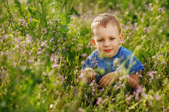 Beautiful little boy hiding in tall grass squatting Royalty Free Stock Photo