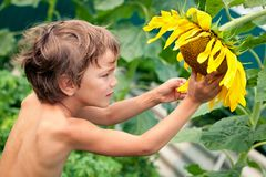 Beautiful little boy and sunflower Royalty Free Stock Photos