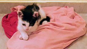 Cat. Beautiful Little cat over the dirty clothes Royalty Free Stock Photography