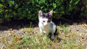 Cat. Beautiful Little cat playing in the garden Royalty Free Stock Photos