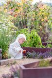 Beautiful Little Child Picking Peppers in Vegetable Garden Royalty Free Stock Photo