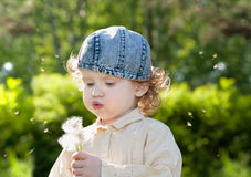 Beautiful little curly girl blowing dandelion Royalty Free Stock Image