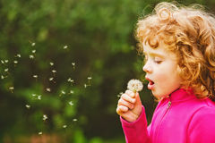 Beautiful little curly girl blowing dandelion Stock Images