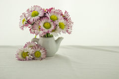 Beautiful little daisies in a bowl. The tiny world of wildflowers Royalty Free Stock Photo