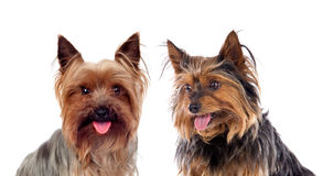 Beautiful little dogs Stock Photo