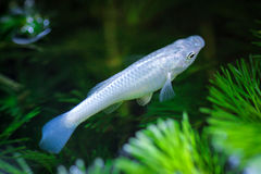 Beautiful little fish Stock Photography