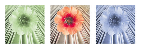 Beautiful little flower in book, aroma of story. Triptych in red, green and blue. Royalty Free Stock Photos