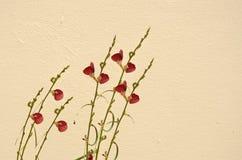 Beautiful little flowers. Wild flowers on concrete wall Stock Photo